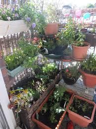 creating an edible garden with homebase and kids part 2 gardengoals