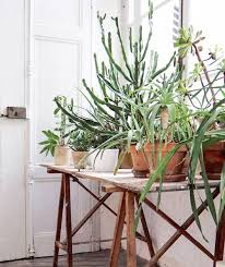 window table for plants green succulent plants on table in front of window sfgirlbybay