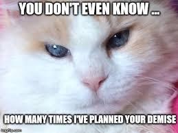 Thinking Cat Meme - thinking of you cat meme binge thinking