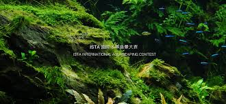 Aquascaping Competition Results Of The Contest Ista Iiac 2016