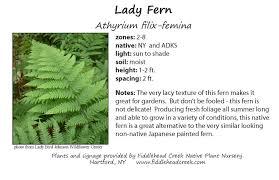 nursery native plants interpretive signage u2013 fiddlehead creek native plant nursery