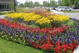 flower garden design on pinterest colorful roses year round
