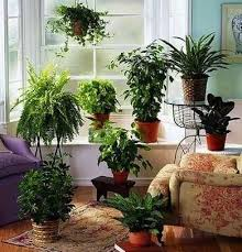 best house plants best house plant botanical blooms the best