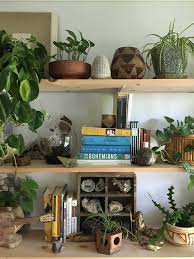 caring for indoor plants in low light conditions architectural
