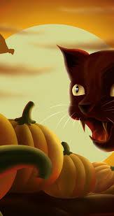 halloween pumpkins cartoons black cat and lots of pumpkins cartoon halloween