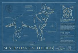 Blue Print Size by Australian Cattle Dog Animal Blueprint Company