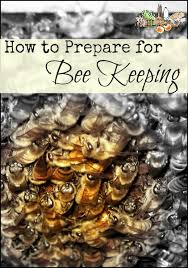 Raising Bees In Backyard by How To Prepare For Bee Keeping Homestead Lady