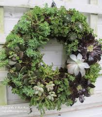 succulent wreath diy project make a succulent wreath our fairfield home garden