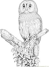 perched barred owl coloring page free printable coloring pages