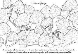 Coloriage à imprimer  Insectes champions de camouflage