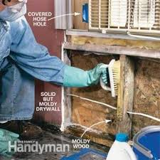 Getting Rid Of Mold In Basement by How To Remove Mold Mold Remediation U2014 The Family Handyman