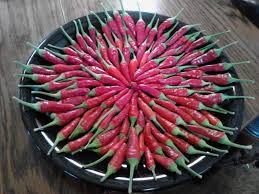chilly chili ornamental pepper pepper talk the pepper