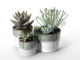 bathroom design magnificent small house plants low light bath
