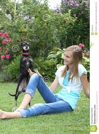 small teen cute little dog playing with a young stock image image