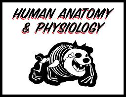 Fundamental Anatomy And Physiology Davis Ashley Honors Human Anatomy U0026 Physiology