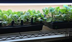 grow lights for indoor herb garden want to garden like a pro here s a simple and affordable indoor