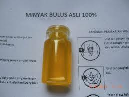 Minyak Bulus Asli Papua minyak bulus obat warisan leluhur yang tetap terjaga jual minyak