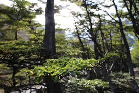 cool trees martial glacier sea slug chronicles