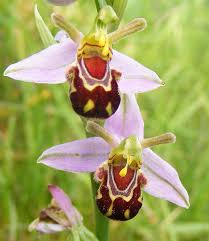 flower orchid 17 flowers that look like something else bored panda