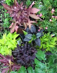 ornamental pepper plant types growing a decorative pumpkin chili