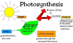 seventh grade lesson photosynthesis claim and evidence