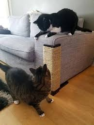 Sofa Scratch Protector Best 25 Couch Protector Ideas On Pinterest Pet Couch Cover Diy