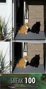 Sneaky Cat Meme - sneaky funny