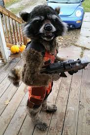 Girls Raccoon Halloween Costume 15 Creative Halloween Costume Ideas Bored Panda