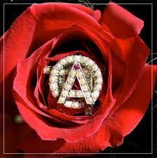 rose theme alpha 3 alpha omicron pi aoii a rose ever blooming aoii songs