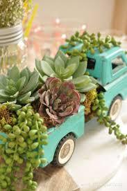 103 best succulents images on pinterest gardening succulents