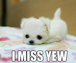 Miss You Meme Funny - i miss you memes lovequotesmessages