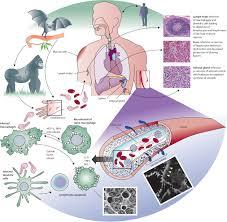 ebola haemorrhagic fever the lancet