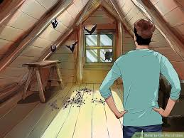 Best Way To Get Rid Of Mosquitoes In Your Backyard The Easiest Way To Get Rid Of Bats Wikihow