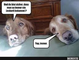 lustige hundesprüche die besten 25 lustige hund bilder ideen auf witzige