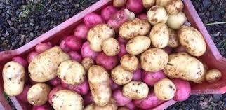 rathdooney vegetable garden blog jan 10th