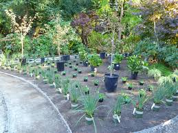 interior inspiring ideas for your backyard decoration ideas using