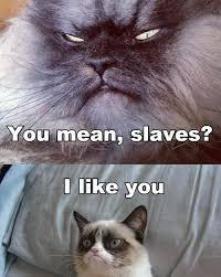 Thanksgiving Cat Meme - 10 cats even grumpier than grumpy cat