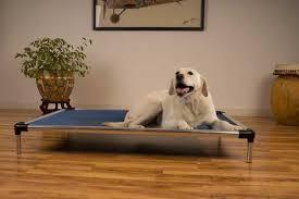 cujo raised dog cot aluminum u2013 best of dog