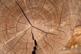 wood log bossfight