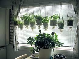 hanging herb garden kit indoor ideas kitchen planters gardens 6078