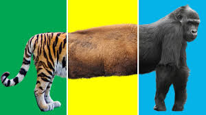 learn zoo wild safari animals video for kids wrong heads body