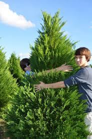 life drafts style clarks hill christmas tree farm