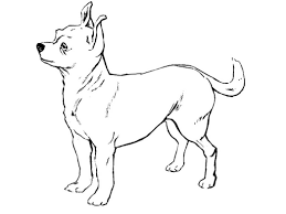 chihuahua dog colouring sheet free coloring pages 430848
