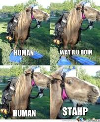 Scuba Meme - scuba horse stahp know your meme