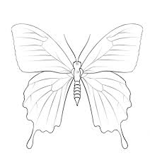 butterfly coloring pages ulysses butterfly coloring page free printable coloring pages