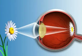 What Structure Of The Eye Focuses Light On The Retina Pinhole Glasses Do They Work