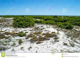 tundra native plants native vegetation long beach island stock photo image 42169720