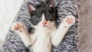 rheumatoid arthritis cats are great for people with chronic rheumatoid arthritis cats are great for people with chronic disease everyday health