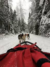 Dog sledding Picture of Cold Fire Creek Dogsledding Valemont