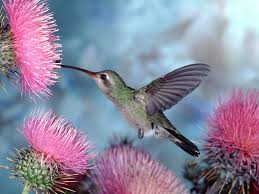 Flower And Bird - flowers and birds hd wallpapers 6989726